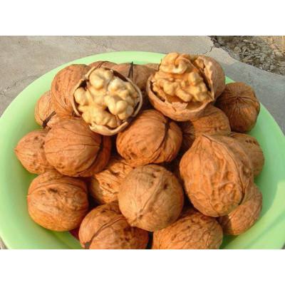 Грецкий орех Гигант