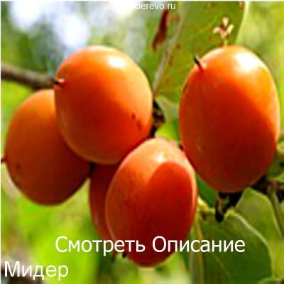 Хурма Мидер